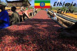 エチオピア グジ (ゲレナ農園)  ゲイシャジャスミンG1(グレードワン)ナチュラル