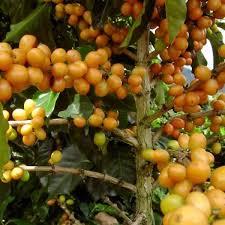 コロンビア マグダレナSUPコーヒー